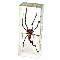 Clear Large Golden Orb Spider Paperweight