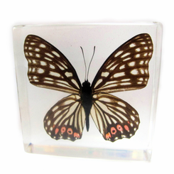 Clear Red Ring Skirt Butterfly Paperweight