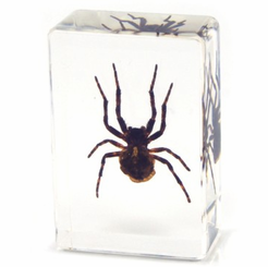 Clear Spider Paperweight