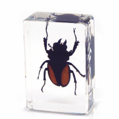 Clear Stag Beetle Paperweight