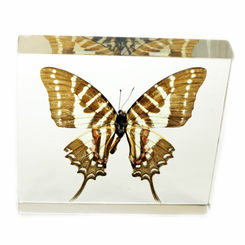 Clear Swallowtail Butterfly Paperweight