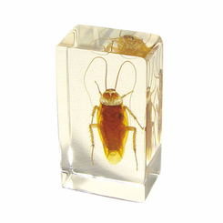 Cockroach  Paperweight