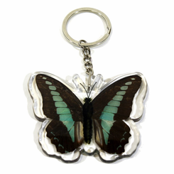 Common Blue Bottle Butterfly Key Chain