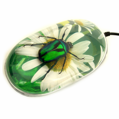 Flower Background Chafer Beetle Computer Mouse