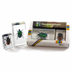 Green Chafer And Stag Beetle Paperweight Collection