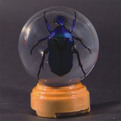 Green Chafer Beetle Insect Globe