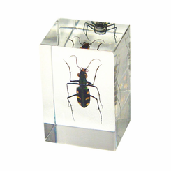 Green Tiger Beetle Paperweight