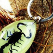 Insect Keychain