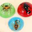Insect Magnets