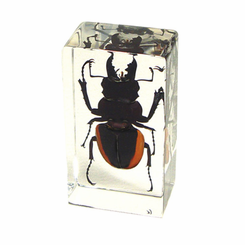 Stag Beetle Paperweight