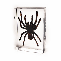 Large Tarantula Desk Decoration