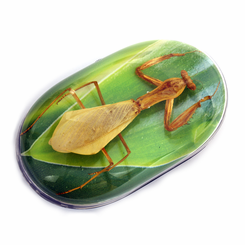 Leaf Background Mantis Computer Mouse