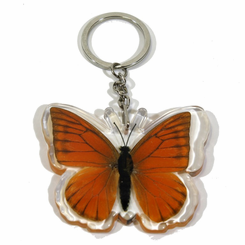 Orange Albatross Butterfly Key Chain