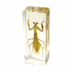 Praying Mantis  Paperweight