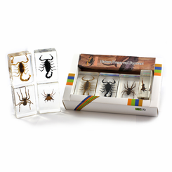 Scorpion And Spider Paperweight Collection