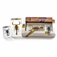 Scorpion Paperweight Collection
