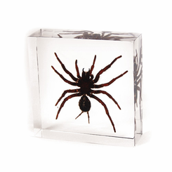 Small Tarantula Desk Decoration