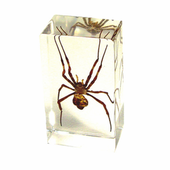 Spider  Paperweight