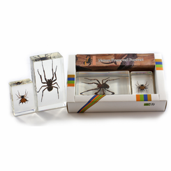 Spider Paperweight Collection