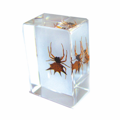 Spiny Spider  Paperweight