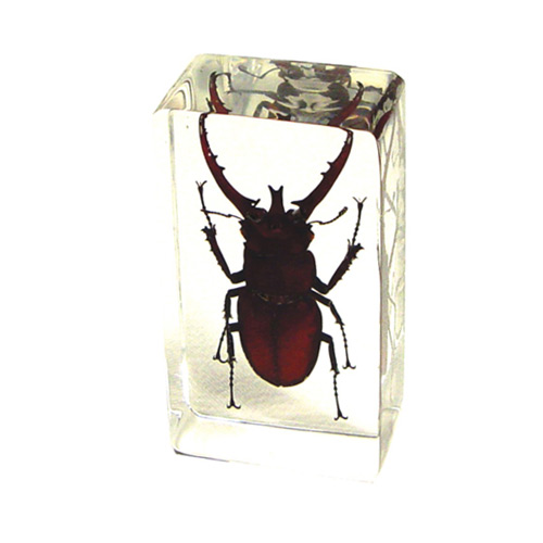 Stag Beetle  Paperweight - Click to enlarge