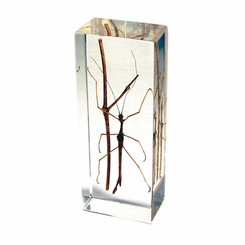 Stick Bug Paperweight