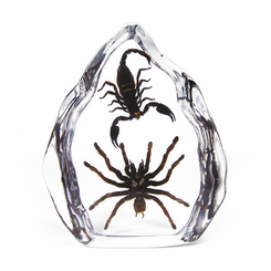 Tarantula And Black Scorpion Desk Decoration
