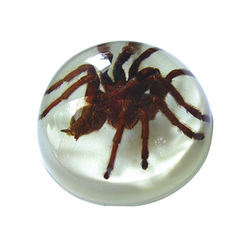 Turantula White Background Desk Decoration