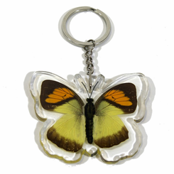 Yellow Orange Tip Butterfly Key Chain