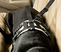 Canine Covers® Travel Buckle-Up