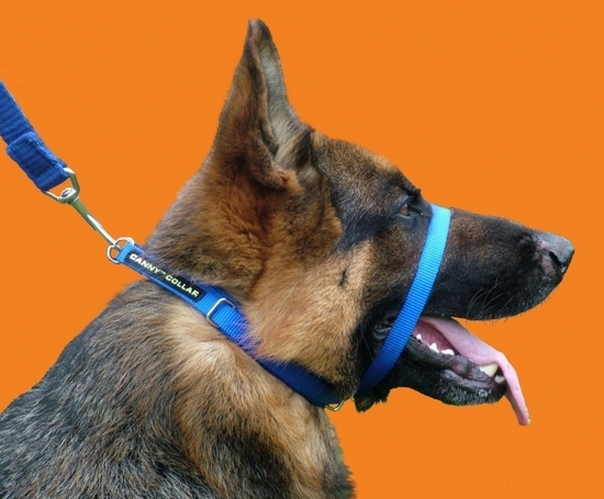 Head Harness For Dog Reviews