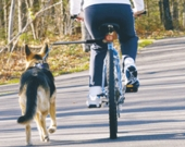 Considerations for Biking Your Dog