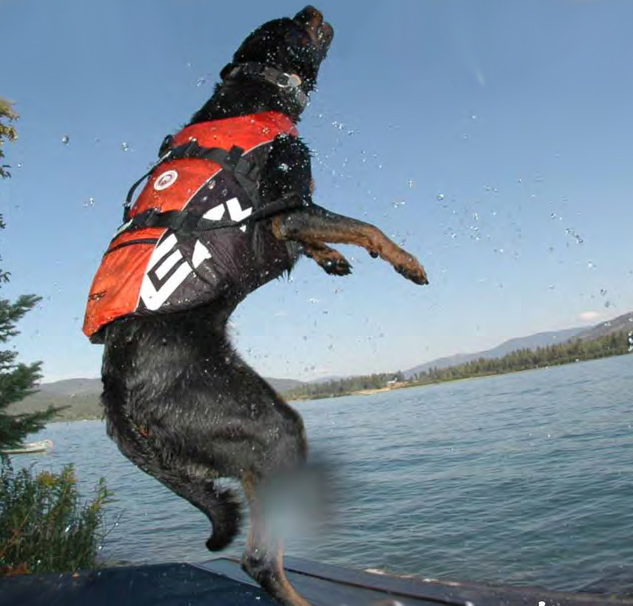Ezydog Dog Flotation Device Dog Life Jackets Dog Life Vest