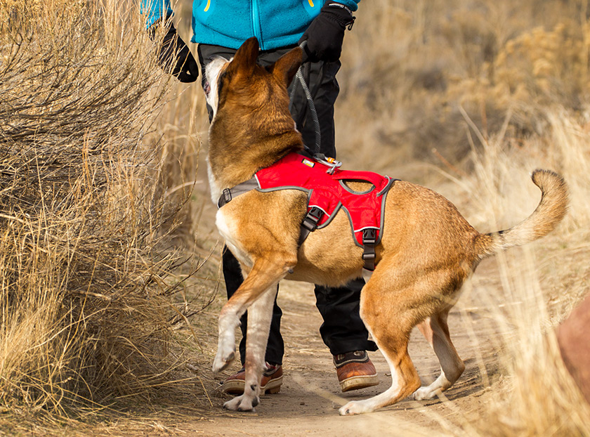 how to put on ruffwear harness