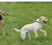 Scott's Favorite Leashes For Control