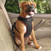 Solvit Padded Vehicle Safety Harness