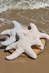 Barefoot Dreams Starfish CozyChic Ocean Tooth Fairy Pillow