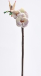 Orchid Stem Flitty
