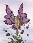 'Summer Wind Fairy'<BR>by Amy Brown