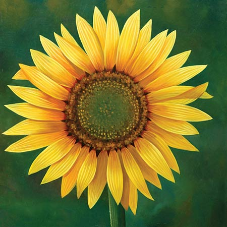 Yellow Sunflower On Green Background Canvas Oil Painting
