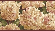 Hydrangea Wallpaper Border RC005153b