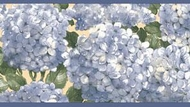 Hydrangea Wallpaper Border RC005154b