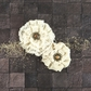 "Capri Paper & Fabric Flowers - Pinot Grigio 2.25"" to 3"""