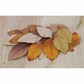 "Florella Mulberry Paper Leaves 2"" - 71931"