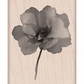 Hero Arts Mounted Rubber Stamps - Painted Poppy