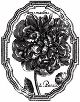 LaBlanche Silicone Stamp - Framed Peony