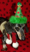 DOG and CAT Christmas Tree Party Hat