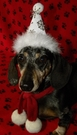 DOG and CAT Snow Flake Winter Party Hat