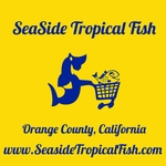 "<font color=red size=""4""><u>Now You are Entering Our Saltywater Live Store!<br>www.seasidetropicalfish.com</font>"