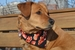 Bacon Lovin' Large Dog Bandana - Click to Enlarge